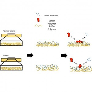 protein adsorption schematic