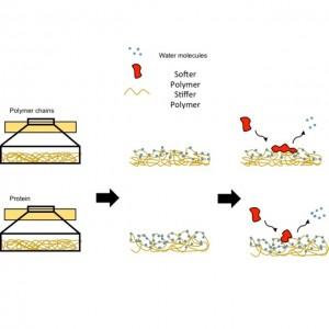 protein adsorption schematic